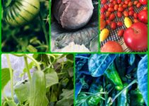 Grow Organic Produce For Your Family With These Tips