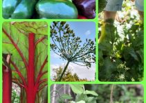 Growing A Vegetable Garden For The Whole Family To Enjoy