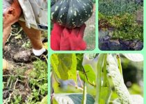 Growing Veggies And Fruit Organically: Tips And Tricks