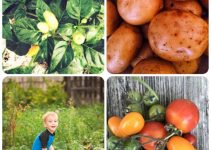 Growing Your Vegetable Garden In Many Types Of Areas