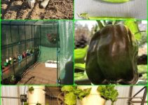 Helpful Tips And Advice For Horticulture Organically
