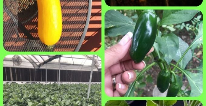 Home Horticulture For More Than A Hobby, But For A Better Life