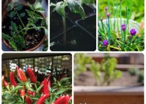 Horticulture Without Chemicals: Everything You Need To Know About Organic Horticulture