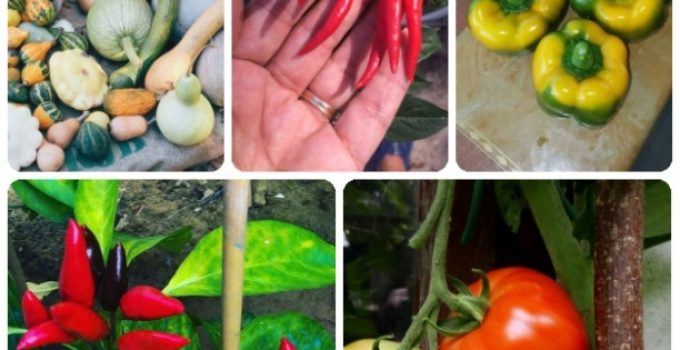Ideas For Your Most Beautiful Vegetable Garden Ever!