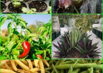 Love Vegetable Gardening? Try These Organic Vegetable Gardening Tips