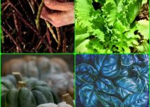 Make The Most Of Your Organic Vegetable Garden with these suggestions