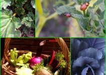 Organic Horticulture 101: Everything You Need To Know