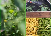 Organic Horticulture Tips That Will Help You Grow Better Food