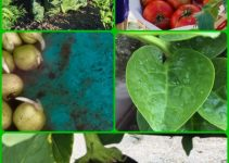 Organic Vegetable Gardening Tips From Very Experienced People