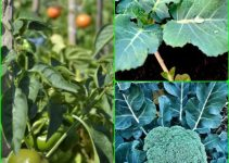 Strategies On How To Maintain A Good Vegetable Garden