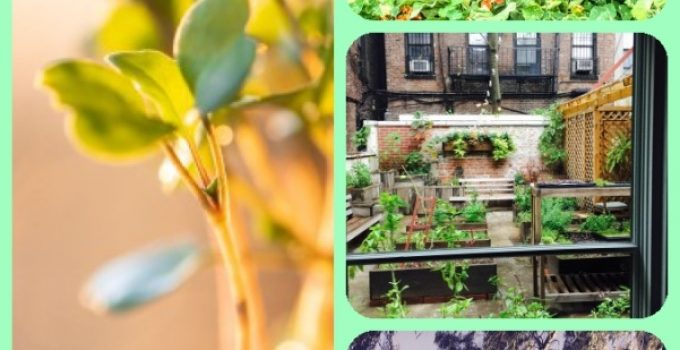 The Vegetable Garden Of Your Dreams Is Within Your Reach – Read On!