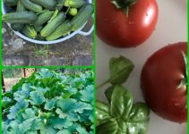 Things To Know If You Wish To Grow: Vegetable Garden Tips