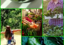 Tips And Tricks On Keeping The Pests Out Of The Vegetable Garden