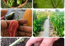 Tips For Maintaining A Chemical-Free Organic Vegetable Garden
