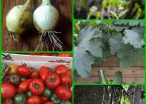 Top Organic Horticulture Advice From The Experts