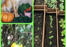Use These Tips To Become Skilled At Organic Horticulture