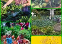 Useful Information For Becoming An Organic Gardener