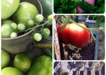 Vegetable Gardening Tips And Strategies That Are Easy To Follow