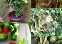 Vegetable Gardening Tips For Growing Better Organic Foods