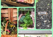Basic Steps For Growing Your Organic Garden
