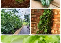 For The Love Of Gardening: Organic Gardening, Vegetable Gardening Advice