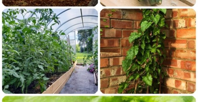 For The Love Of Gardening: Organic Gardening, Vegetable Gardening Advice