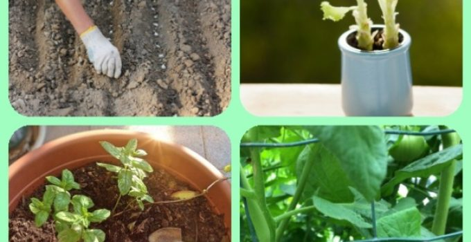 Gardening Without Chemicals: Everything You Need To Know About Organic Gardening, Vegetable Gardening