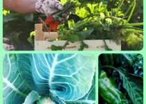 Get A Better Garden With These Sensible Gardening Tips!