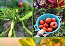 How To Grow A Beautiful Organic Garden