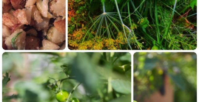 Learn More About Organic Gardening, Vegetable Gardening By Taking This Advice