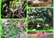 Need Advice On Organic Gardening, Vegetable Gardening? Read On