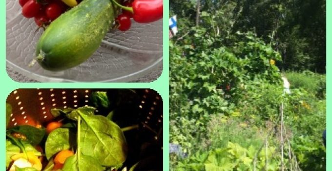 Need Help With Organic Gardening, Vegetable Gardening? Try These Ideas