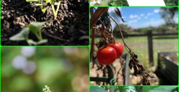 Organic Gardening, Vegetable Gardening Advice For A Better Garden