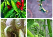 Organic Gardening, Vegetable Gardening Made Simple Through These Tips