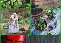 Useful Advice For Growing Produce Organically