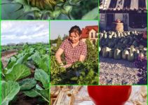 What There Is To Know About Organic Gardening, Vegetable Gardening