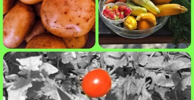 What You Need To Learn About Organic Vegetable Gardening