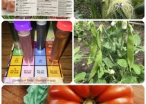 A Healthy Start: How To Grow An Organic Garden