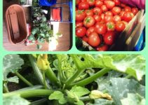 Hints And Advice For Growing An Organic Garden