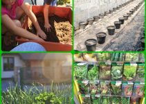 Organic Gardening Can Be Easy If You Use These Tips