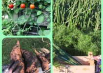 Switch To Organic Gardening With The Help Of These Essential Tips!