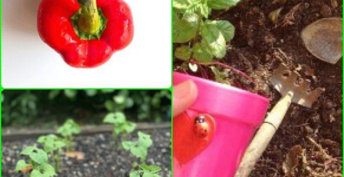 The Skinny On Organic Gardening Like A Pro