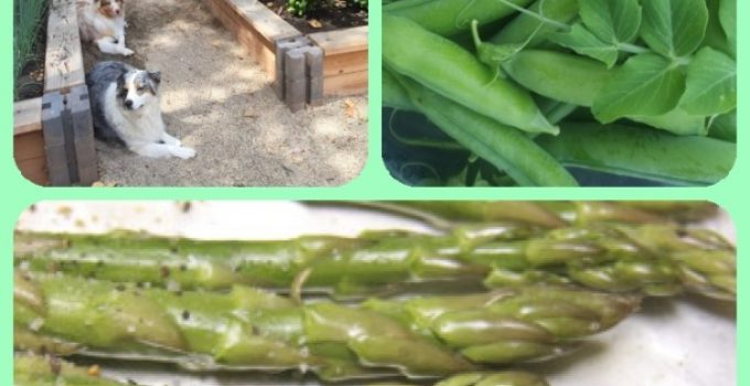 Tips To Improve Your Organic Garden Today!