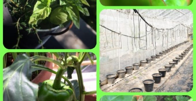 What You Need To Know About Organic Gardening