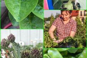 Eat Healthy With Your Own Organic Garden