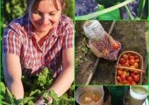 Increase Your Gardening Skills Through These Great Organic Gardening Tips!
