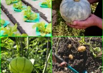 Take A Look At These Organic Gardening Tips!