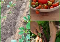 Unsure About Organic Gardening? Use This Excellent Information!