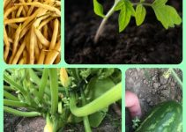Why You Should Give Organic Gardening A Try