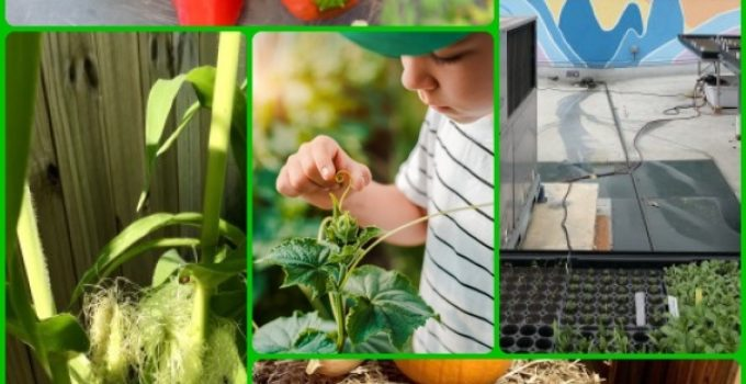 Become An Organic Gardening Master By Using These Hints